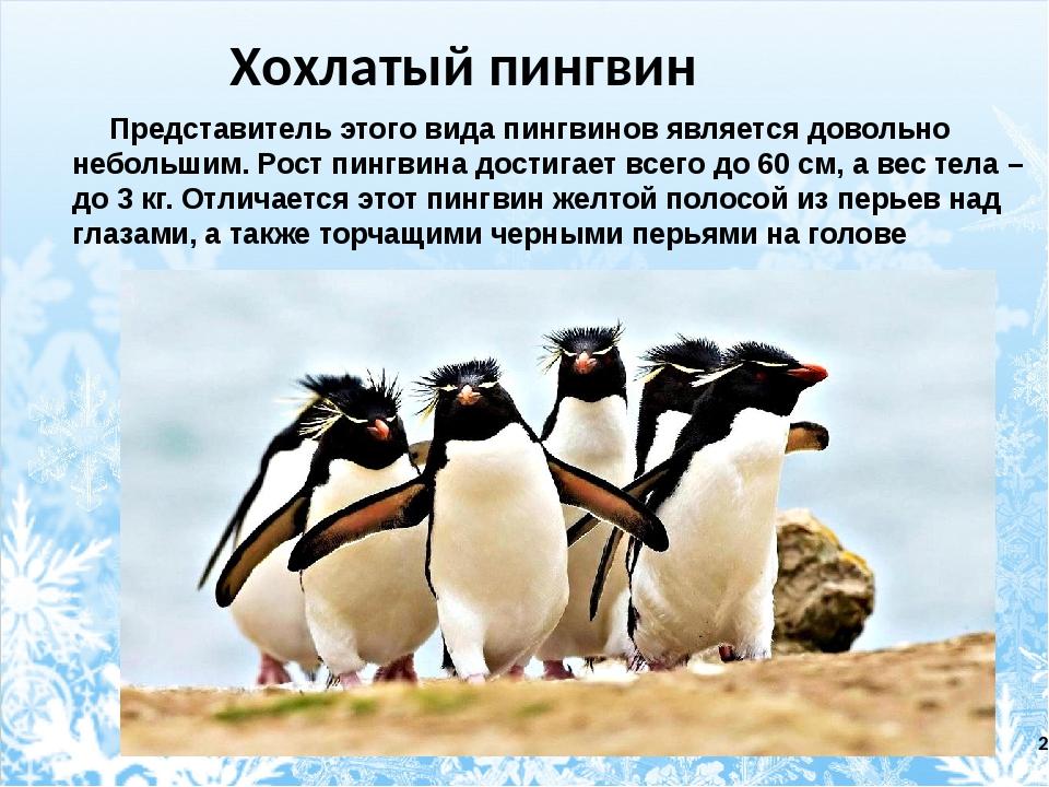 Пингвин — posmotre.li