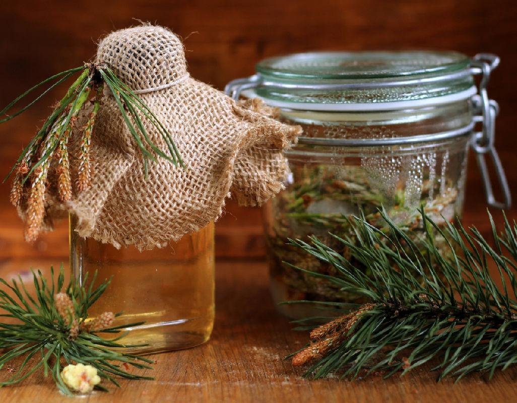 Сироп из сосновых шишек: полезные свойства и противопоказания