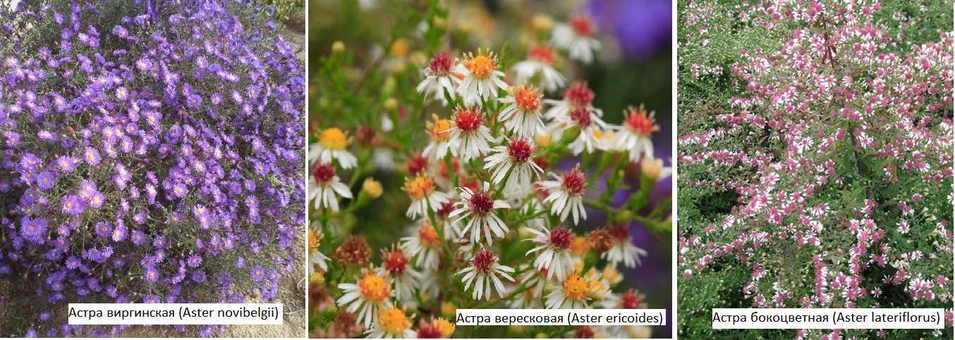 Каталог комнатных цветов с фото и их названия
