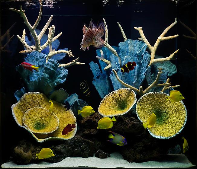 Украшения из коралла: кому подходят, как ухаживать и стоимость изделий