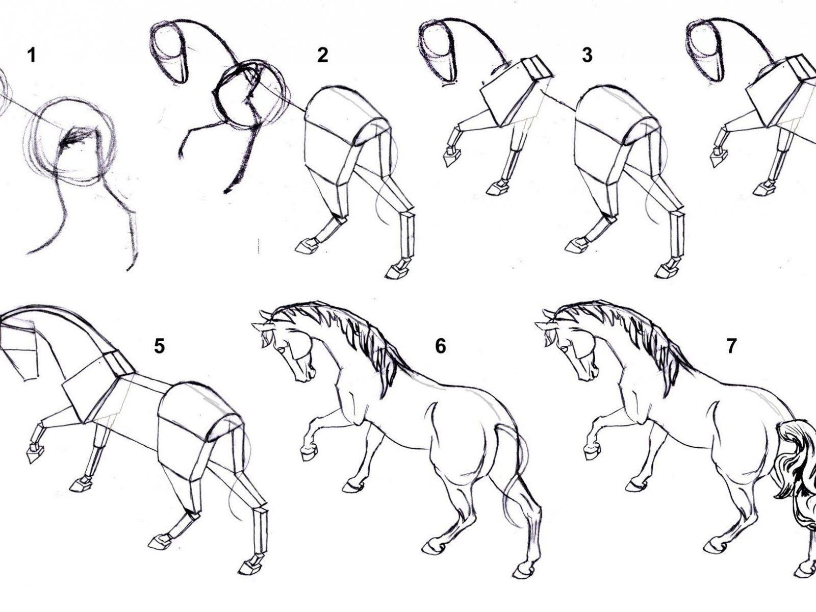 Как нарисовать лошадь