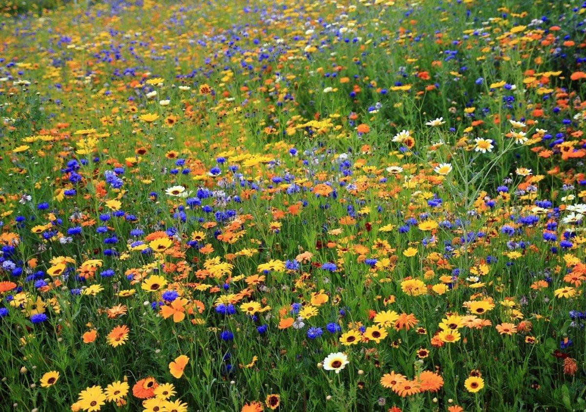 Цветная полянка