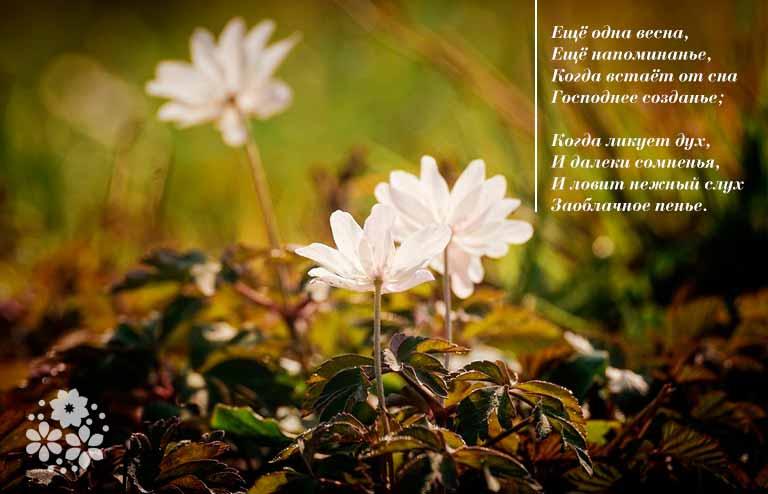 Стихи на пасху: оригинальные, красивые, короткие (смс). лучшие поздравительные стихи на пасху для детей