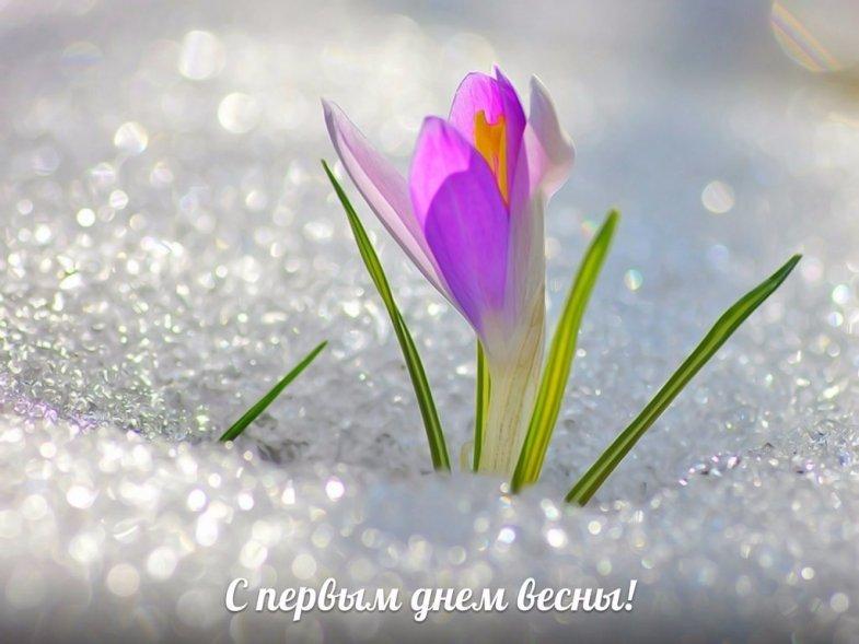 С первым днем весны! открытки, картинки, гифки