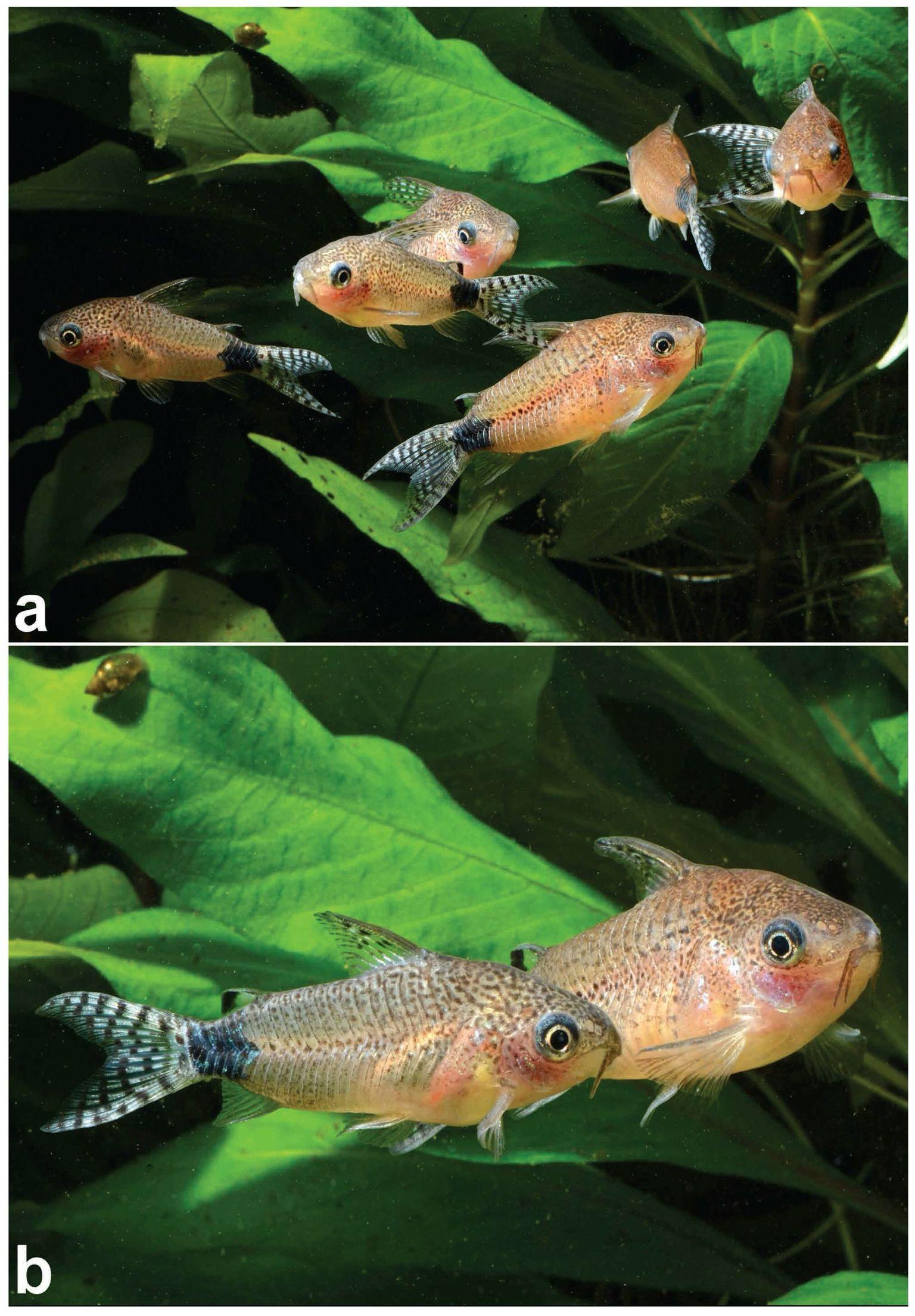 Маленькие рыбки для маленького аквариума: топ–11 популярных представителей