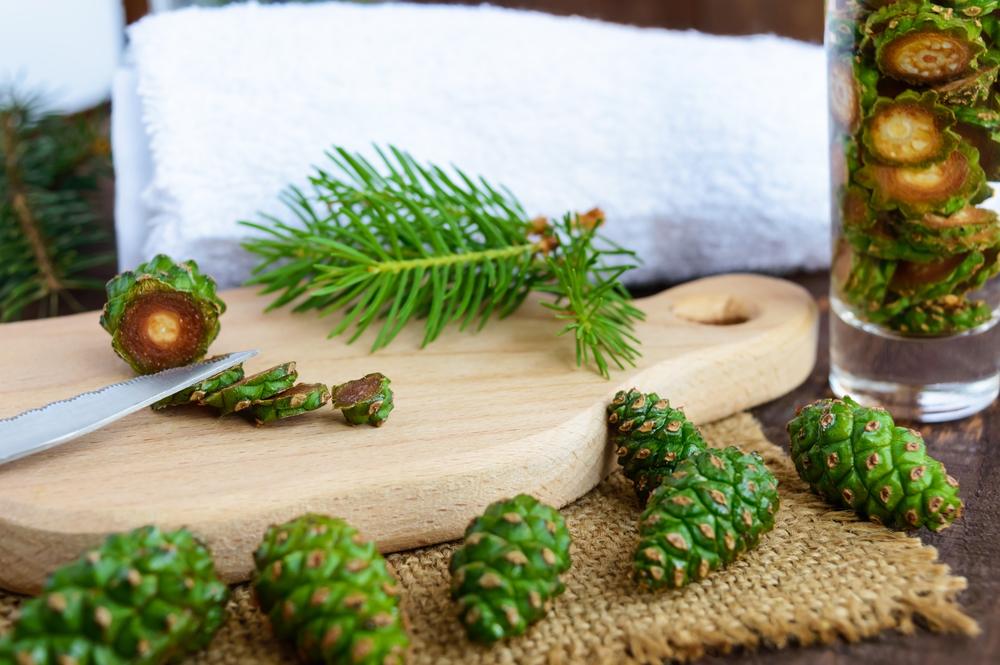 Настойка из сосновых шишек - портал о пчеловодстве nicebee