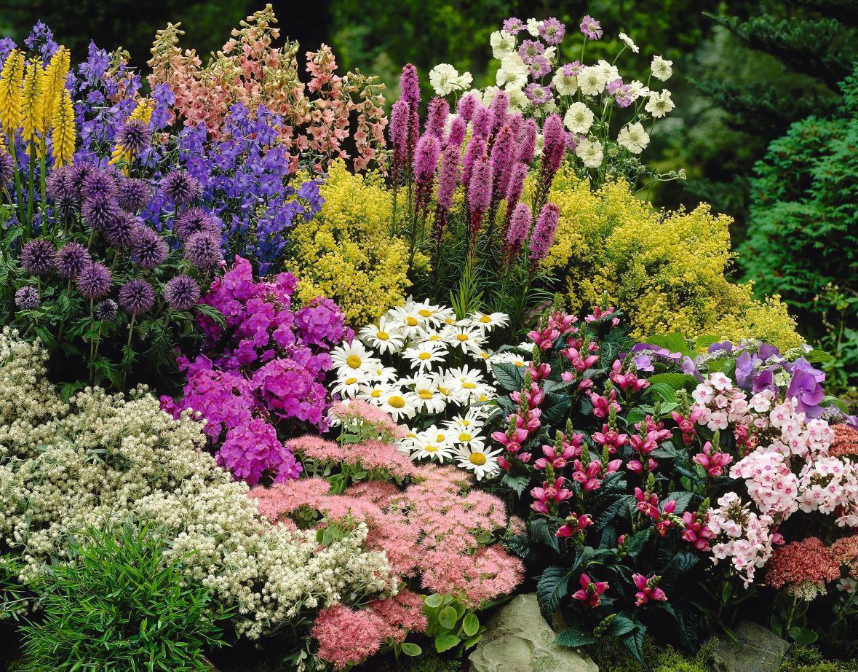 Самые красивые и необычные цветы, рядом с которыми розы просто полевые одуванчики