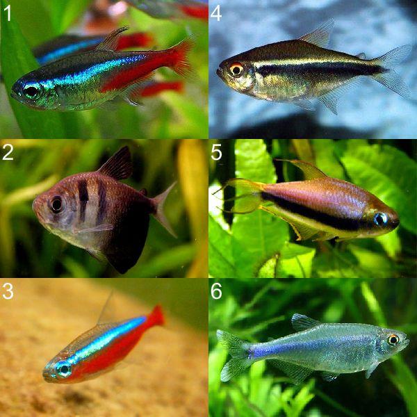 Аквариумные рыбы для начинающих: каких выбрать и как содержать?