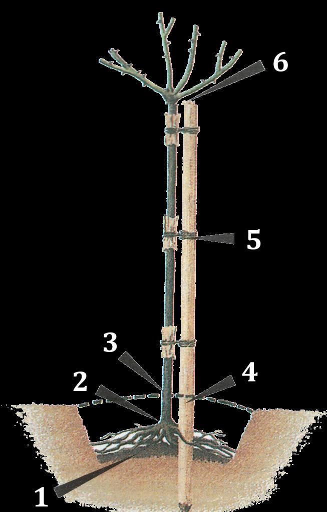 Как сделать стильный цветник из роз – подбор сортов, правила ухода | дизайн участка (огород.ru)