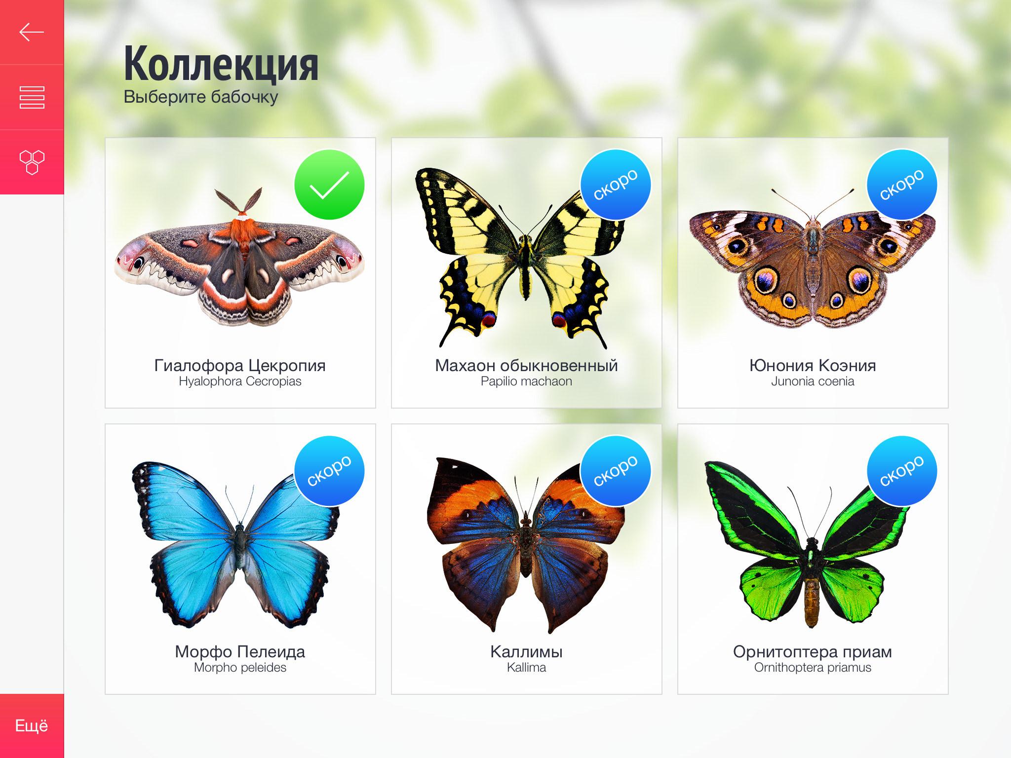 Бабочки - чешуекрылые фото описание названия размер