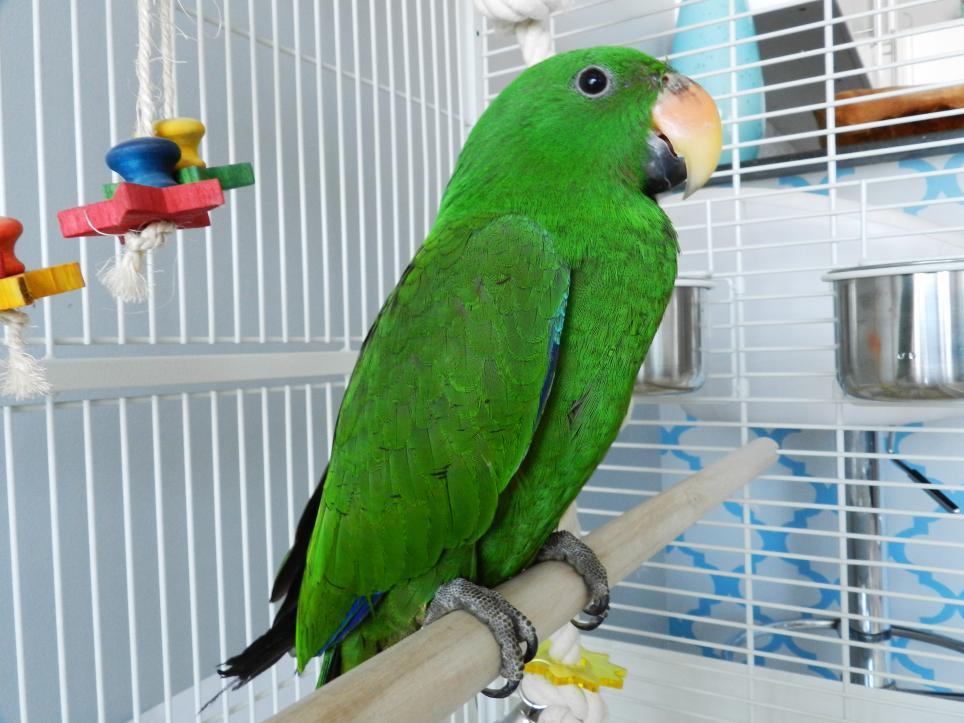 Отряд попугаи - энциклопедия владельца птицы