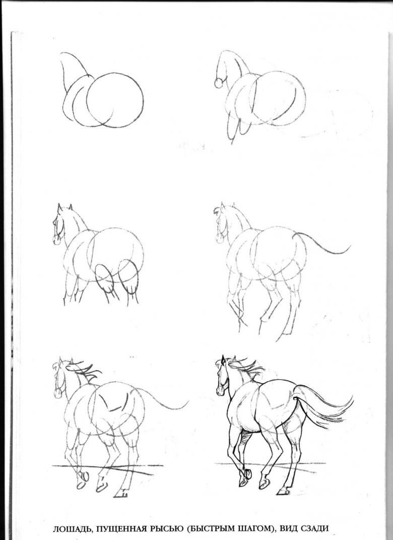 Как нарисовать лошадь - этапы как рисовать своими руками лошадей (130 фото и видео)