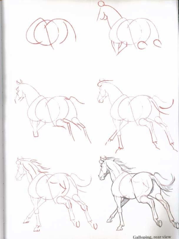 12 простых способов, как нарисовать лошадь карандашом