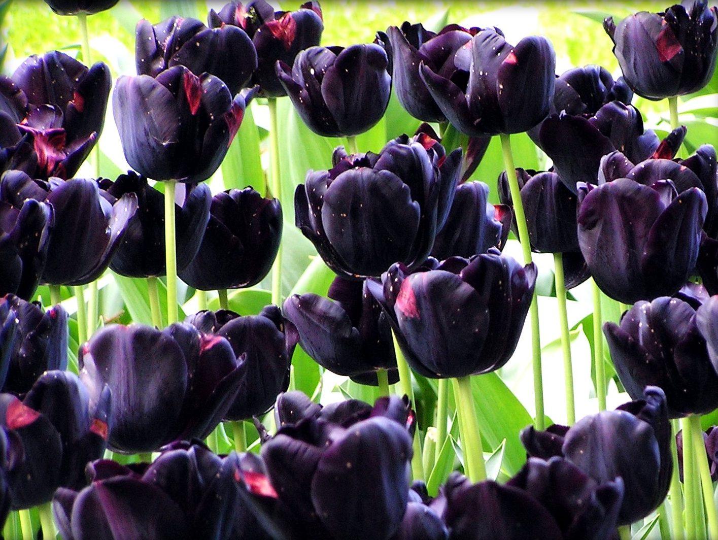 Что делать, когда отцвели тюльпаны: советы бывалых дачников