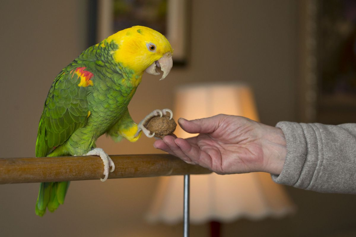 Сколько стоит попугай? цены на разные виды попугаев