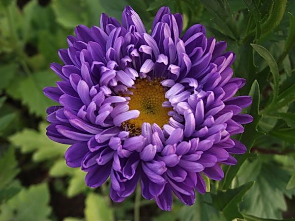 132 загадки про цветы: изучаем растения с детьми