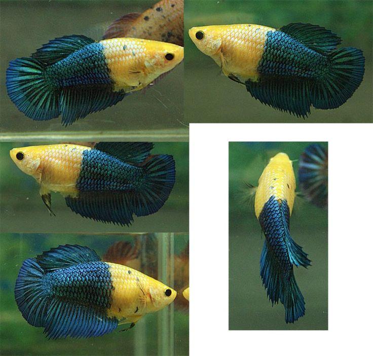 Самые неприхотливые аквариумные рыбки для начинающих
