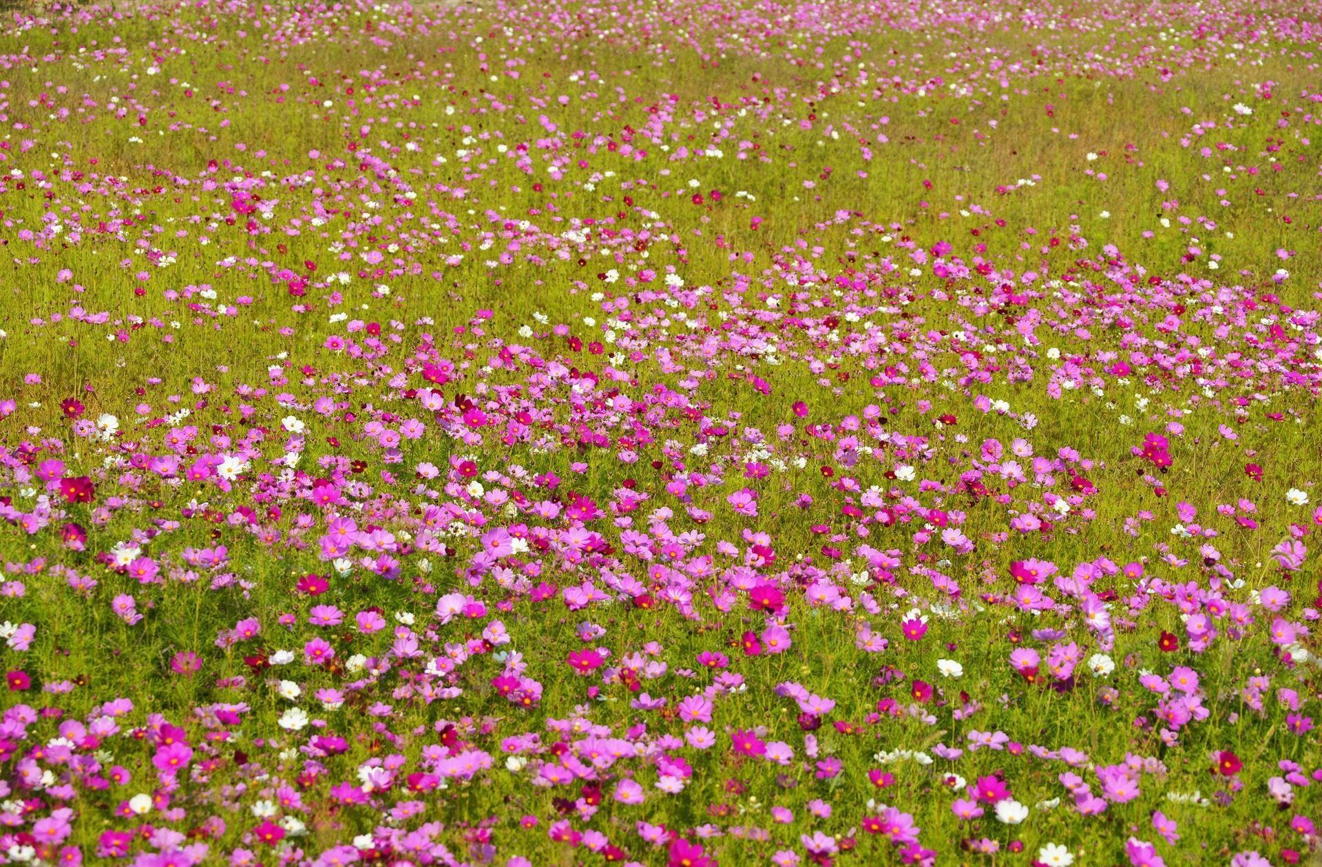 Весенняя поделка в детский сад. цветочная полянка своими руками. мастер-класс с пошаговыми фото объемная поделка из бумаги поляна