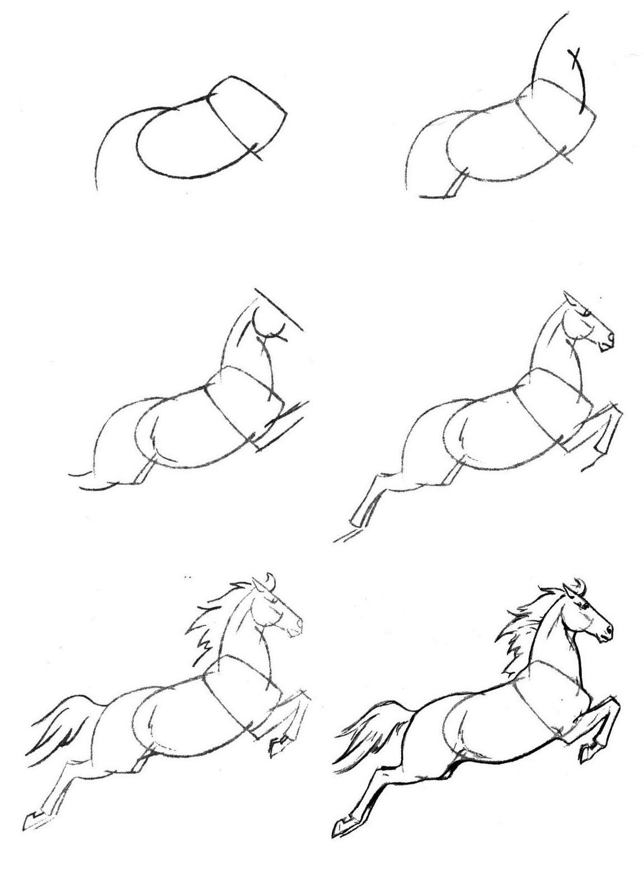 Как легко и красиво нарисовать лошадь поэтапно карандашом для начинающих