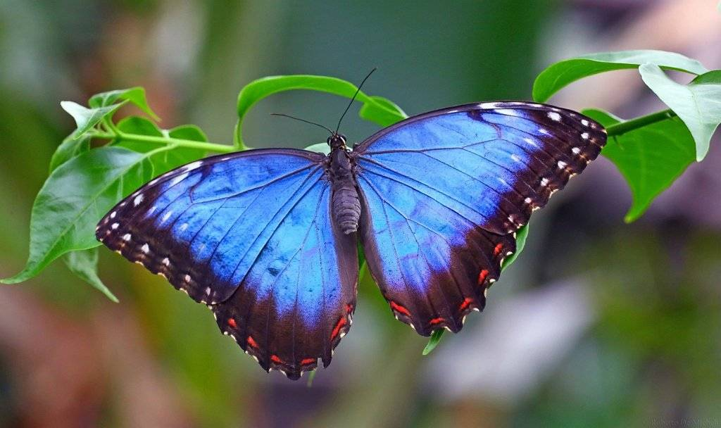 22 самые красивые бабочки: фото и описание
