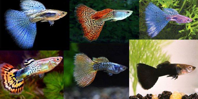 Топ-16 лучших аквариумных рыбок