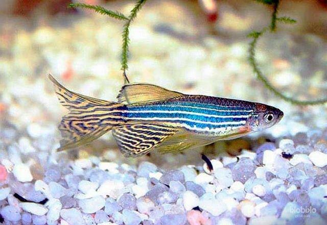 Самые красивые маленькие рыбки для аквариума