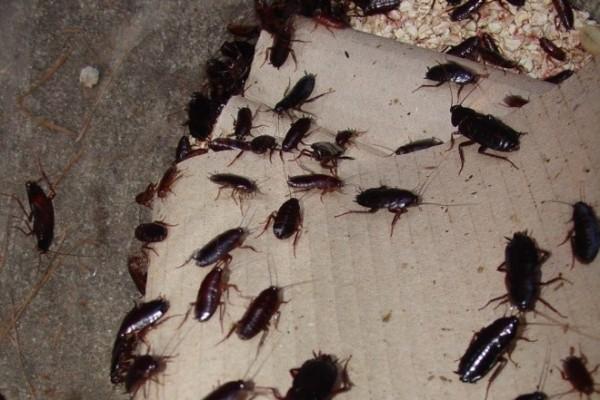 Ловушка для комаров: как выбрать и какая эффективней, фото обзор разновидностей, видео-инструкция по изготовлению своими руками