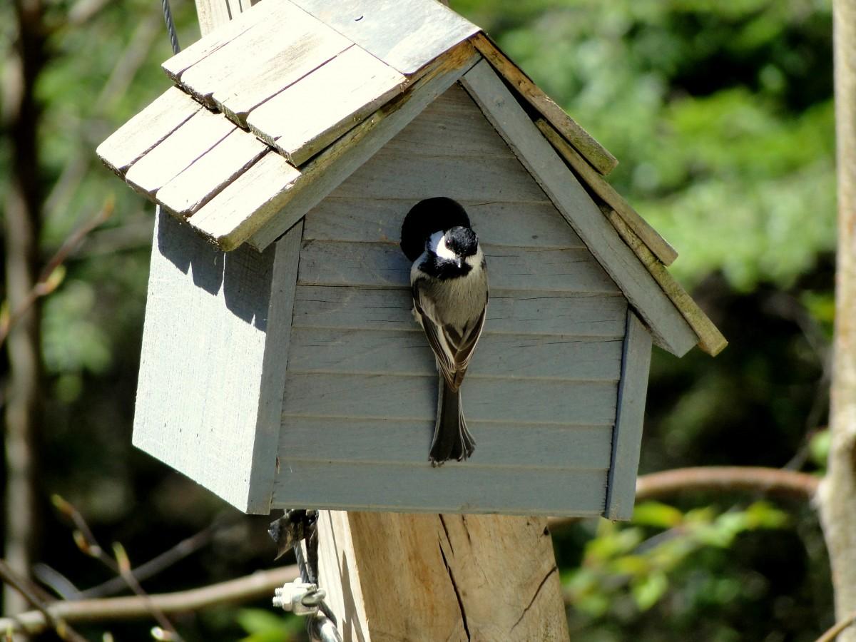 Скворечник своими руками: мастерим (чертежи, размеры) для разных птиц и вешаем