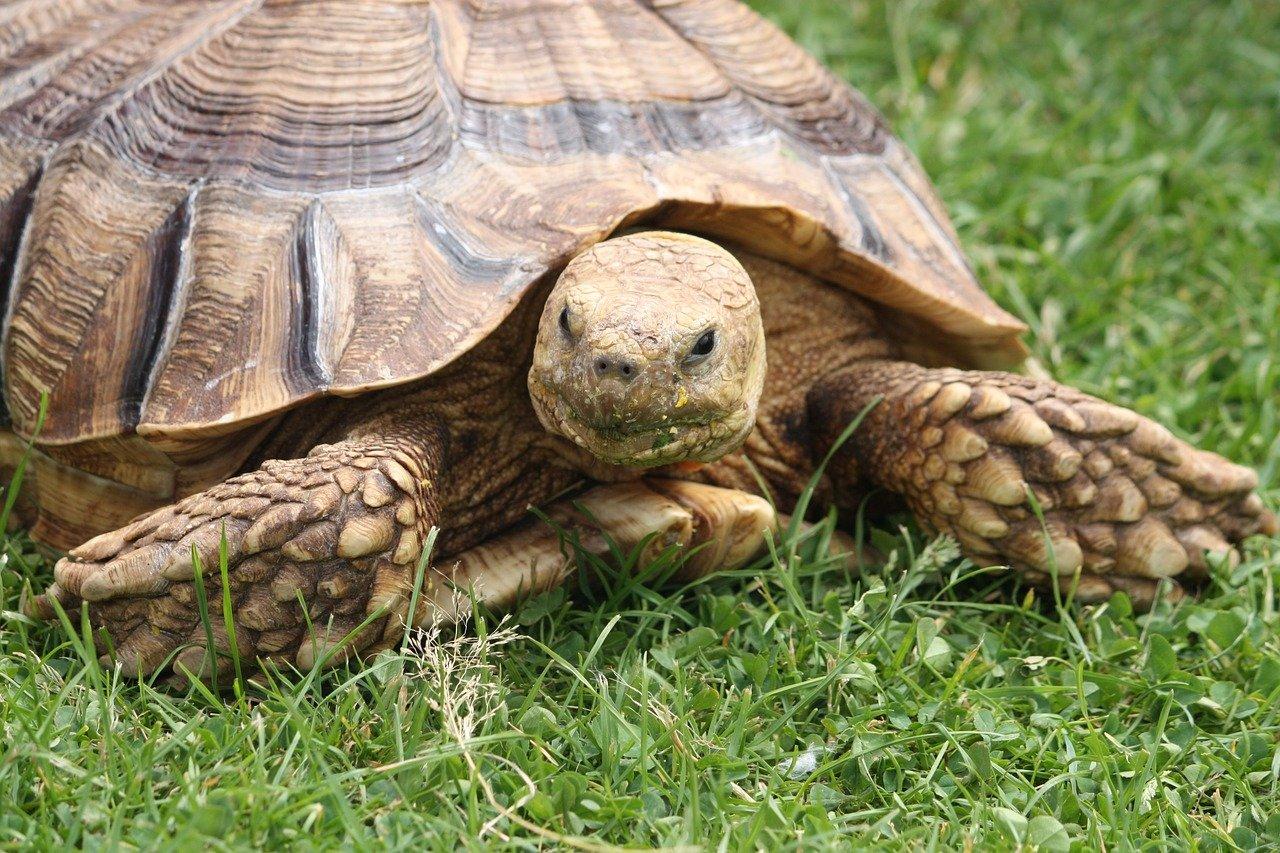 Фотографии самых красивых и необычных черепахи - все о черепахах и для черепах
