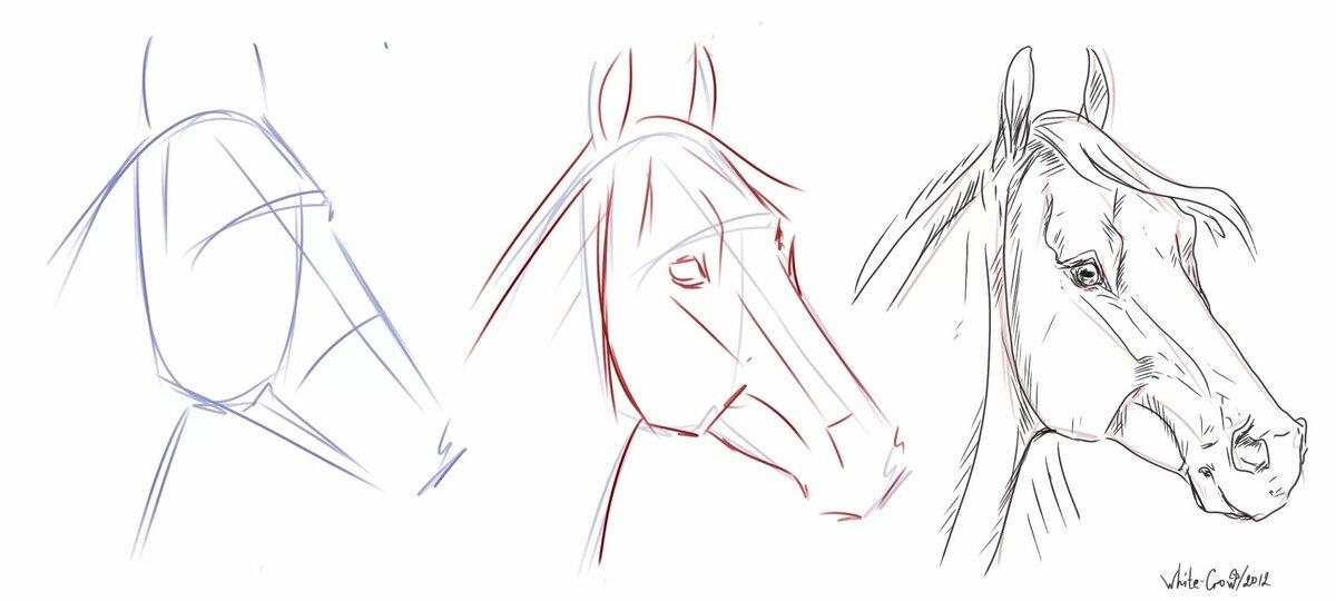 Как нарисовать лошадь поэтапно?