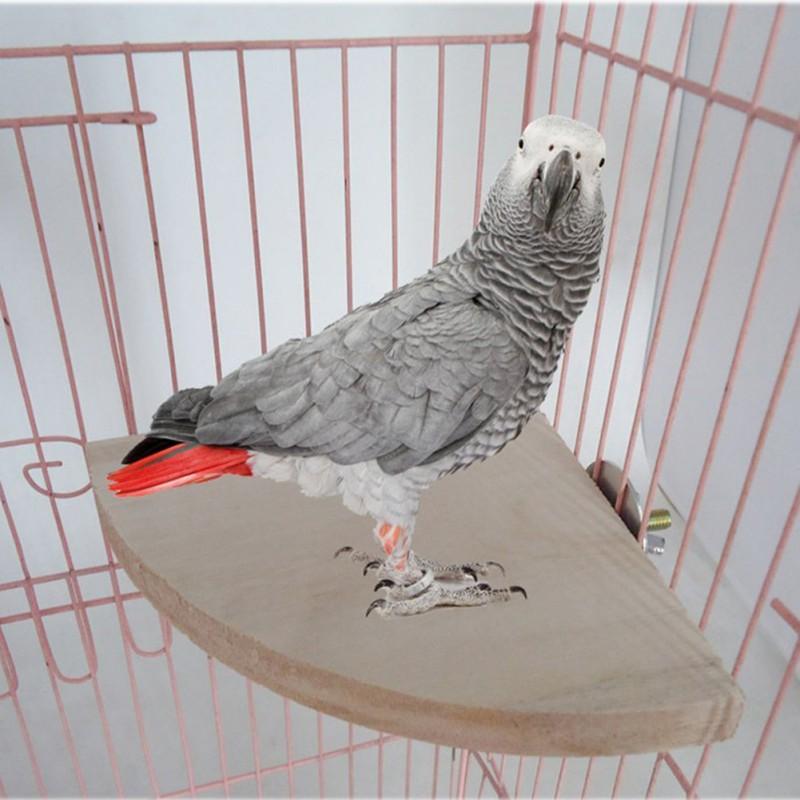 Как подобрать игрушки для волнистых попугаев?