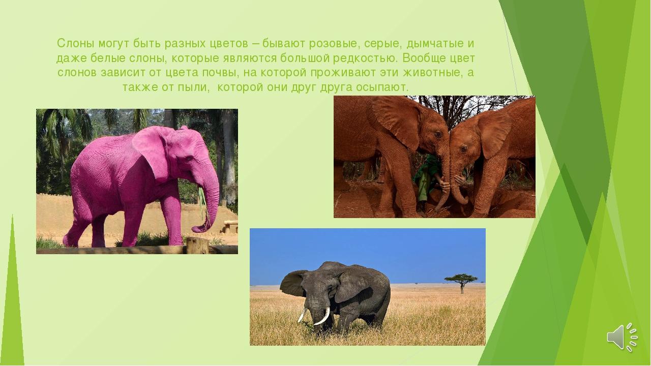 Слон как талисман: значение оберега, разновидности, где поставить и как активировать