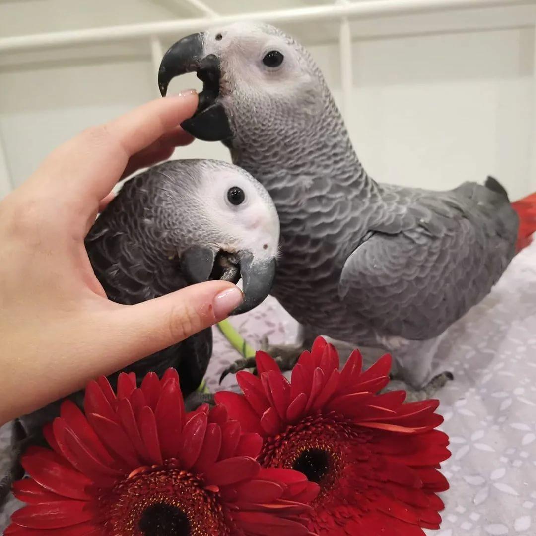 Попугаи. виды попугаев. описание и образ жизни различных попугаев