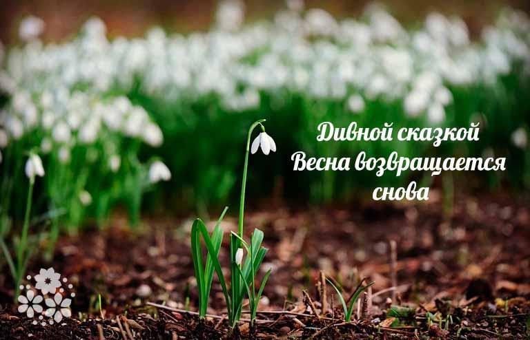 Первый день весны — поздравления с весной (стихи, картинки) — приколись — смешные приколы — видео про животных, полезные истории, картинки о путешествиях