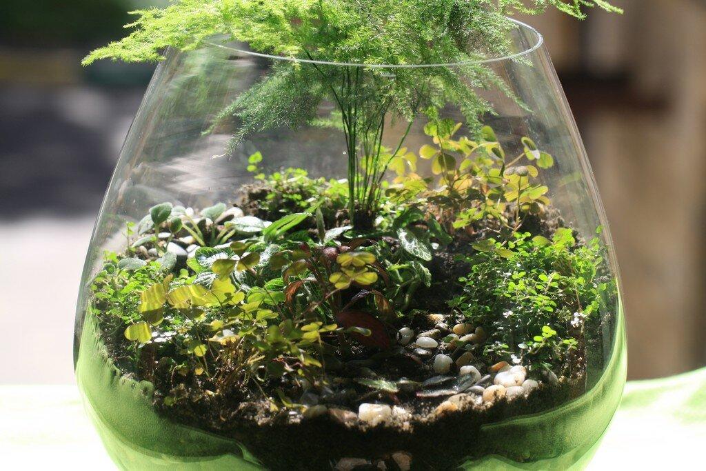 Как сделать флорариум своими руками и ухаживать за ним | вдохновение (огород.ru)
